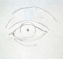 base occhio frontale 1