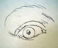occhio tre quarti 1