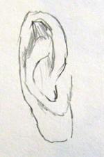 Disegno preliminare dell'orecchio N 2