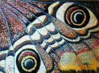 Iacobelli- farfalla