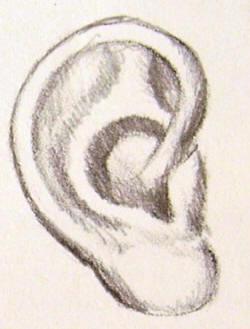 orecchio definito a matita